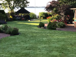Sommergarten im Morgentau
